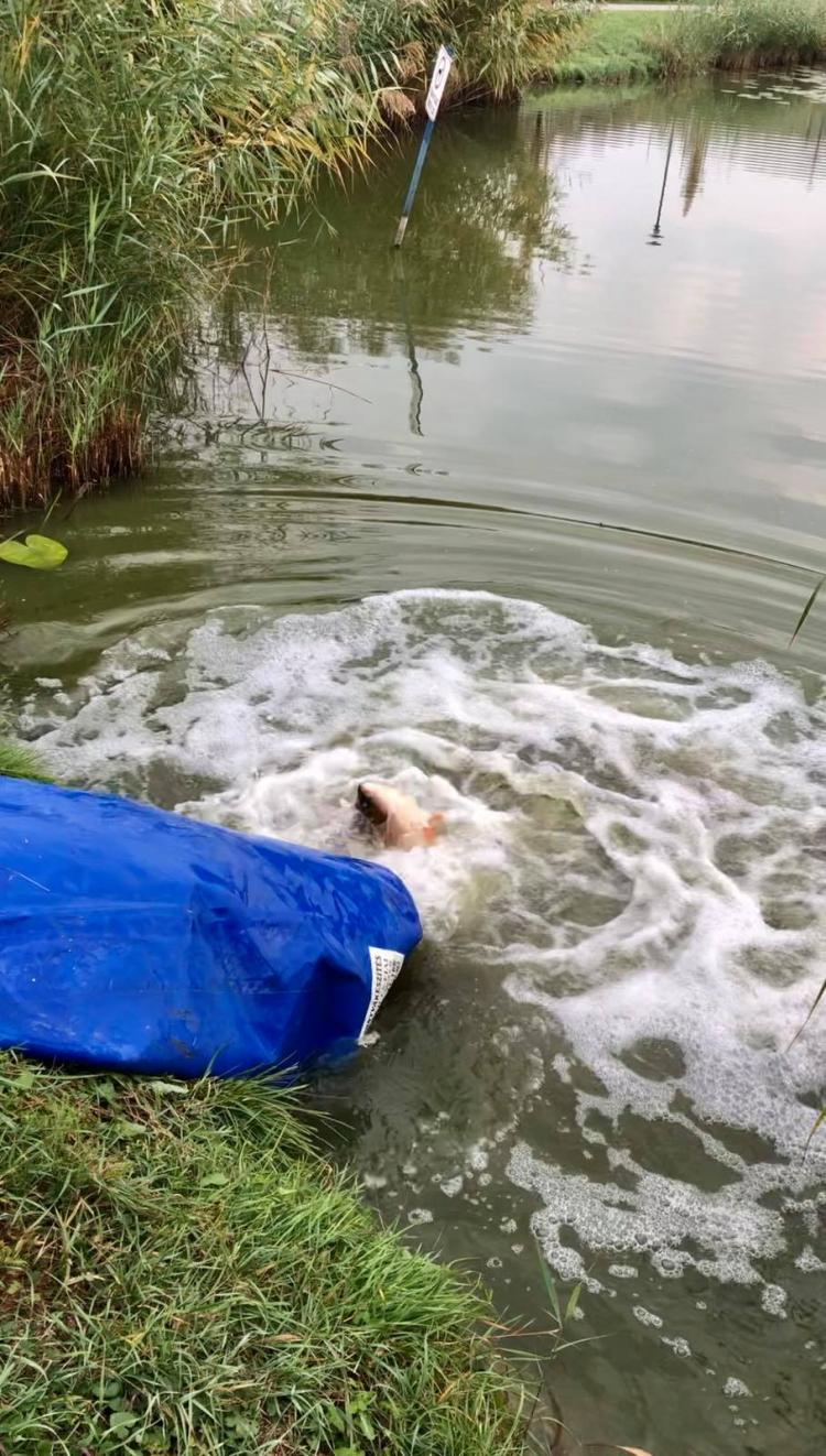Haltelepítés a Bujtosi-tóba